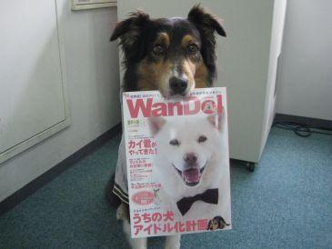 Wandol_3